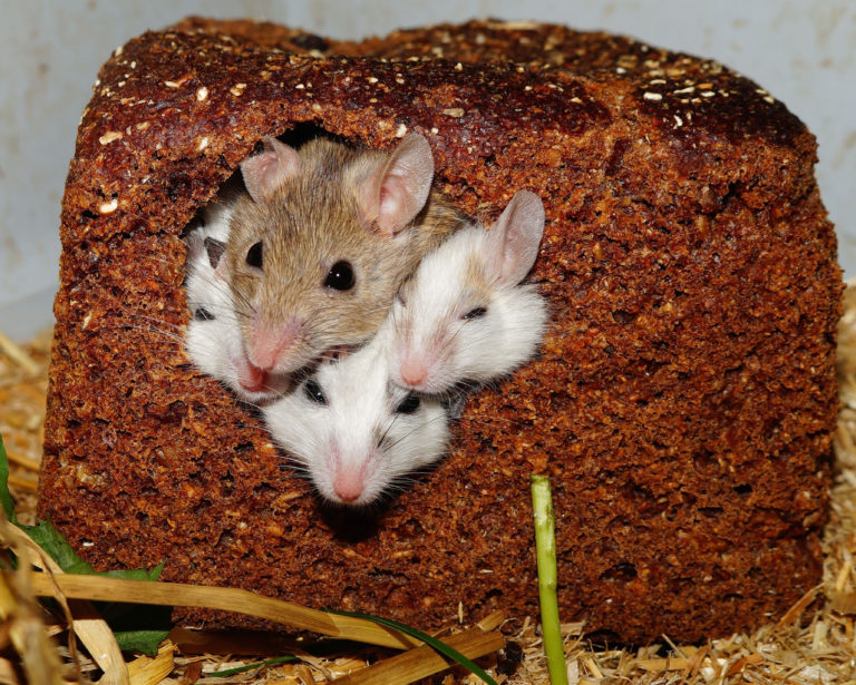 Image Mice – A rough guide to owning Mice