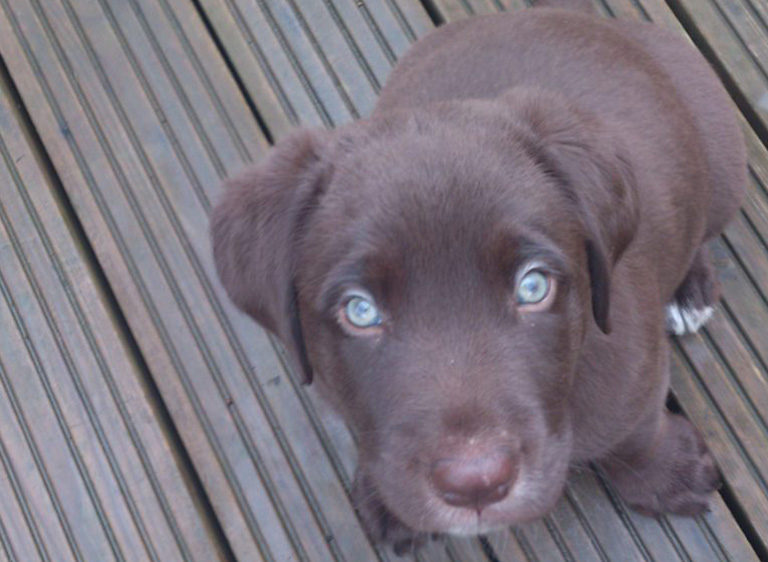 Image Puppies – A rough guide to owning a puppy