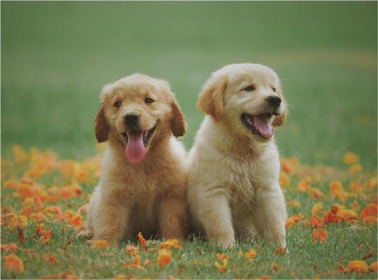 Image Pet Insurance