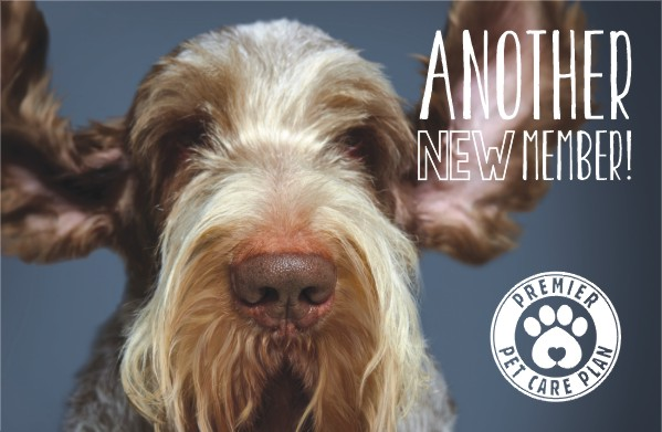 Image Pet Health Plans