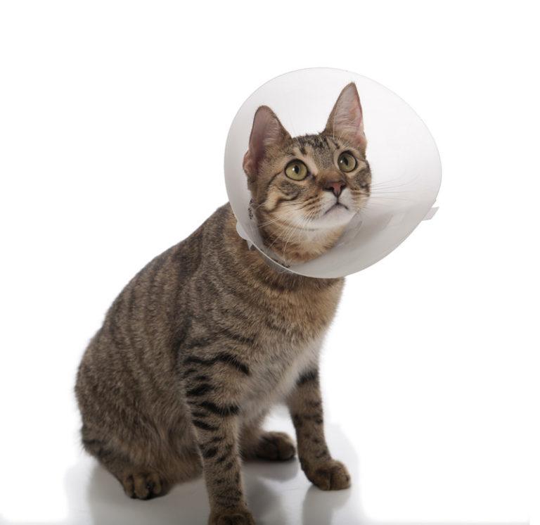 Image Cats – Neutering