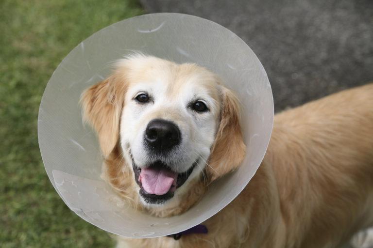Image Dogs – Neutering