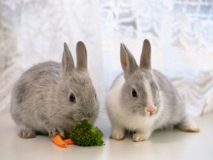 Image Rabbits – Diet