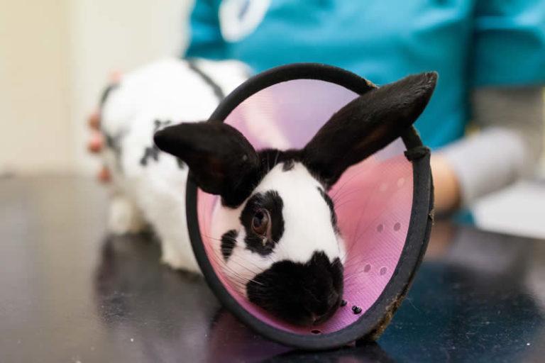 Image Rabbits – Neutering