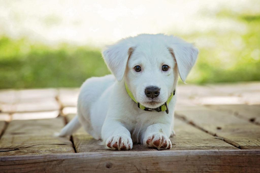 Canva – Portrait of a Dog