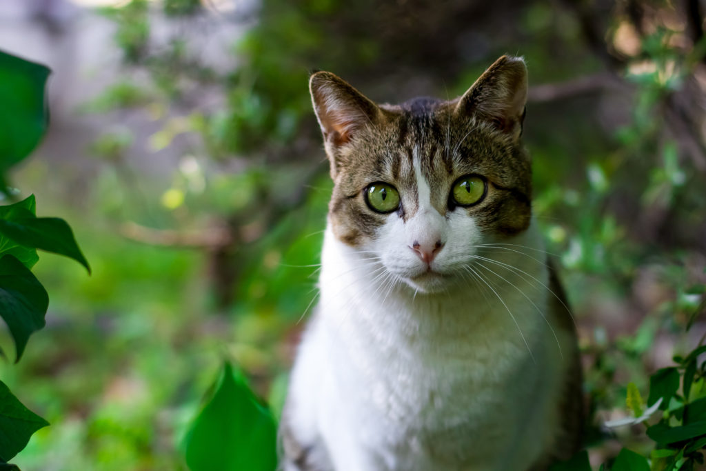 Canva – White and Brown Cat Between Plants