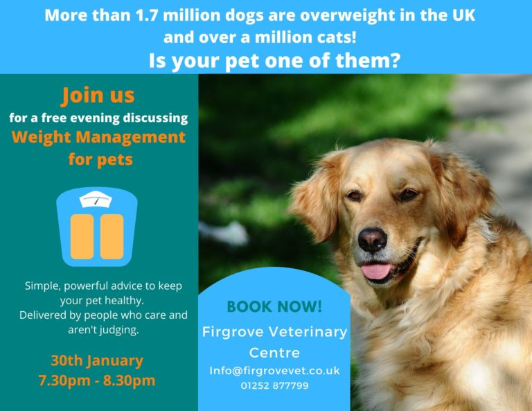 Image Weight management evening for your pet
