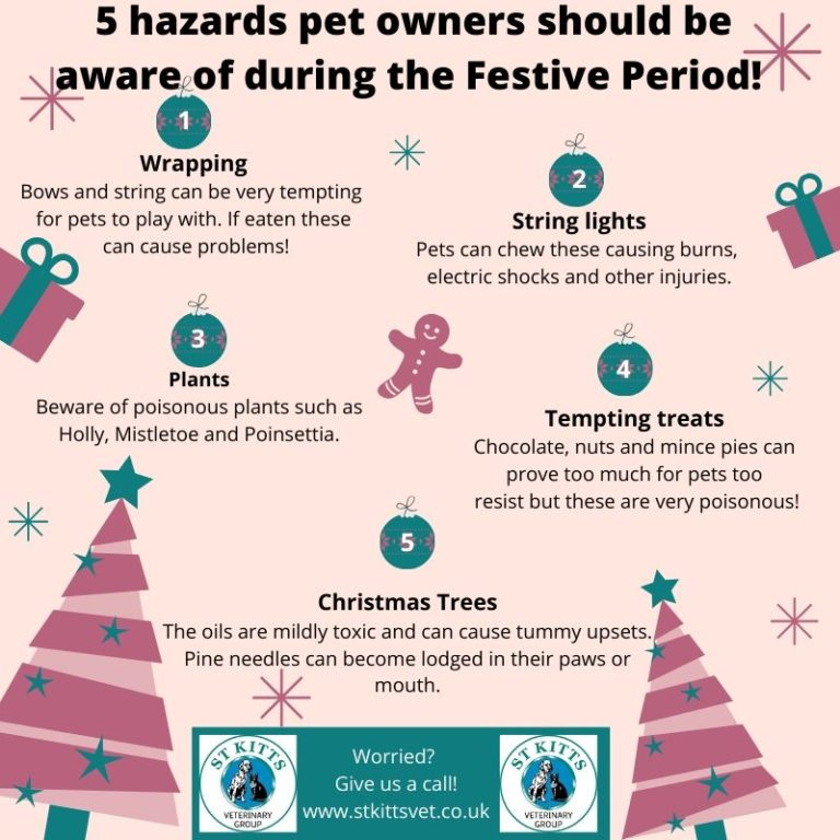Image 5 Hazards pet owners should be aware of during the Festive Period.
