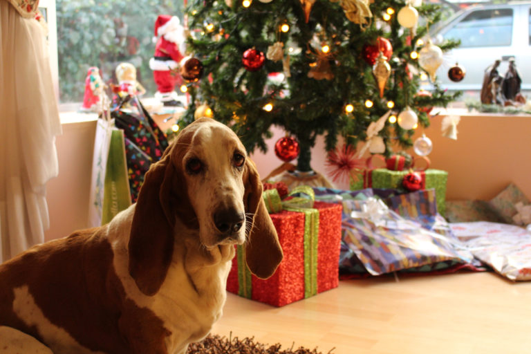 Image The Essential Guide For Keeping Pets  Healthy & Happy Over Christmas.