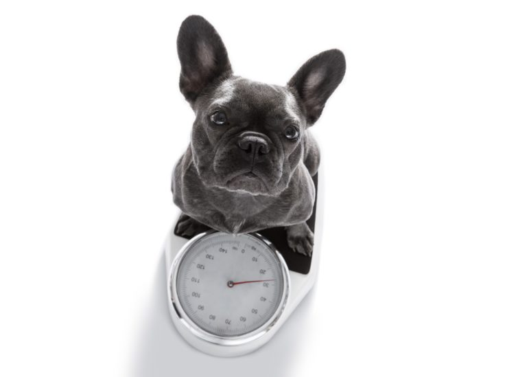 Image Weight Management Advice To Help Keep Pets Healthy & Happy