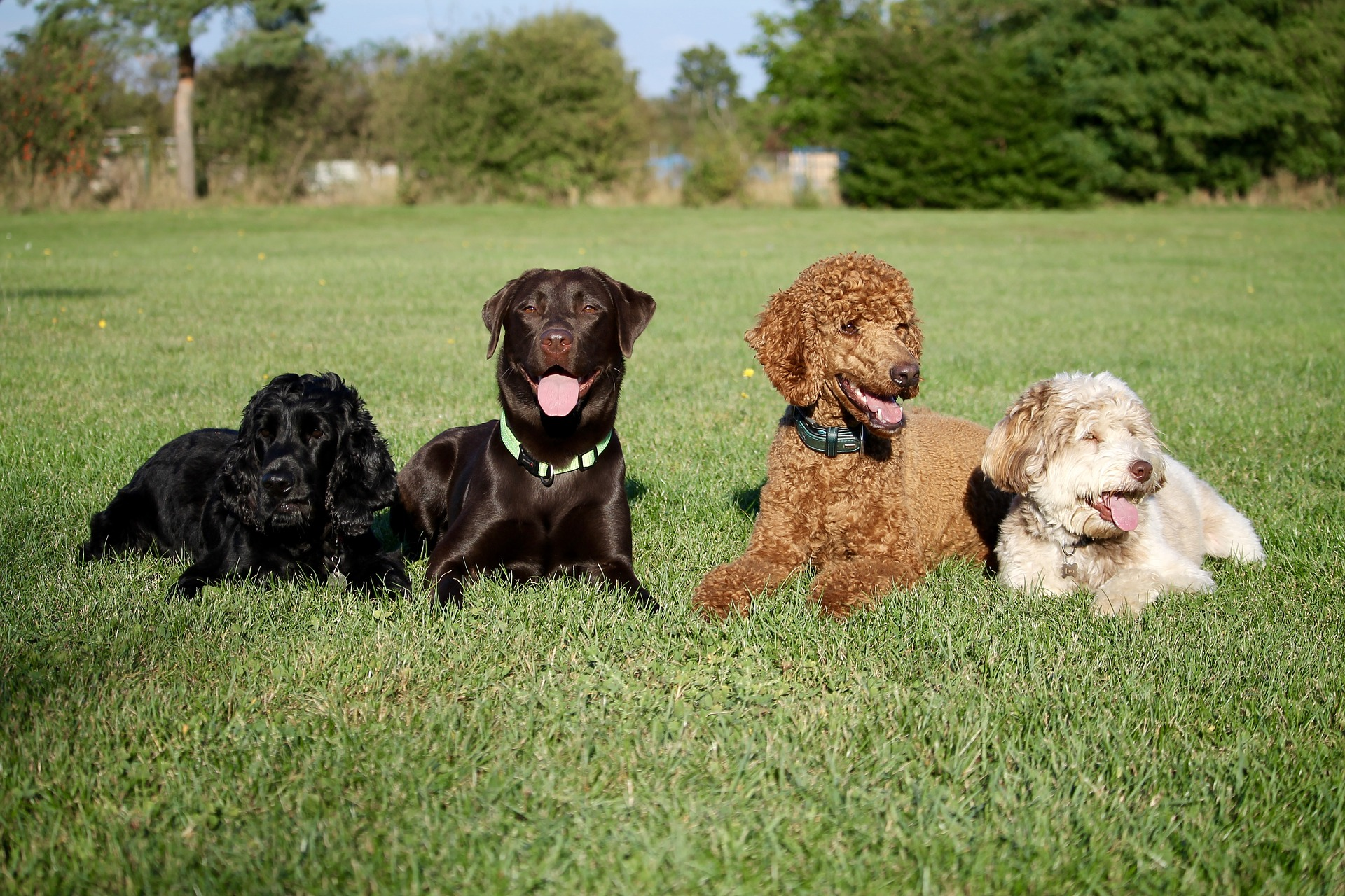Severe Vomiting Condition Affecting UK Dogs