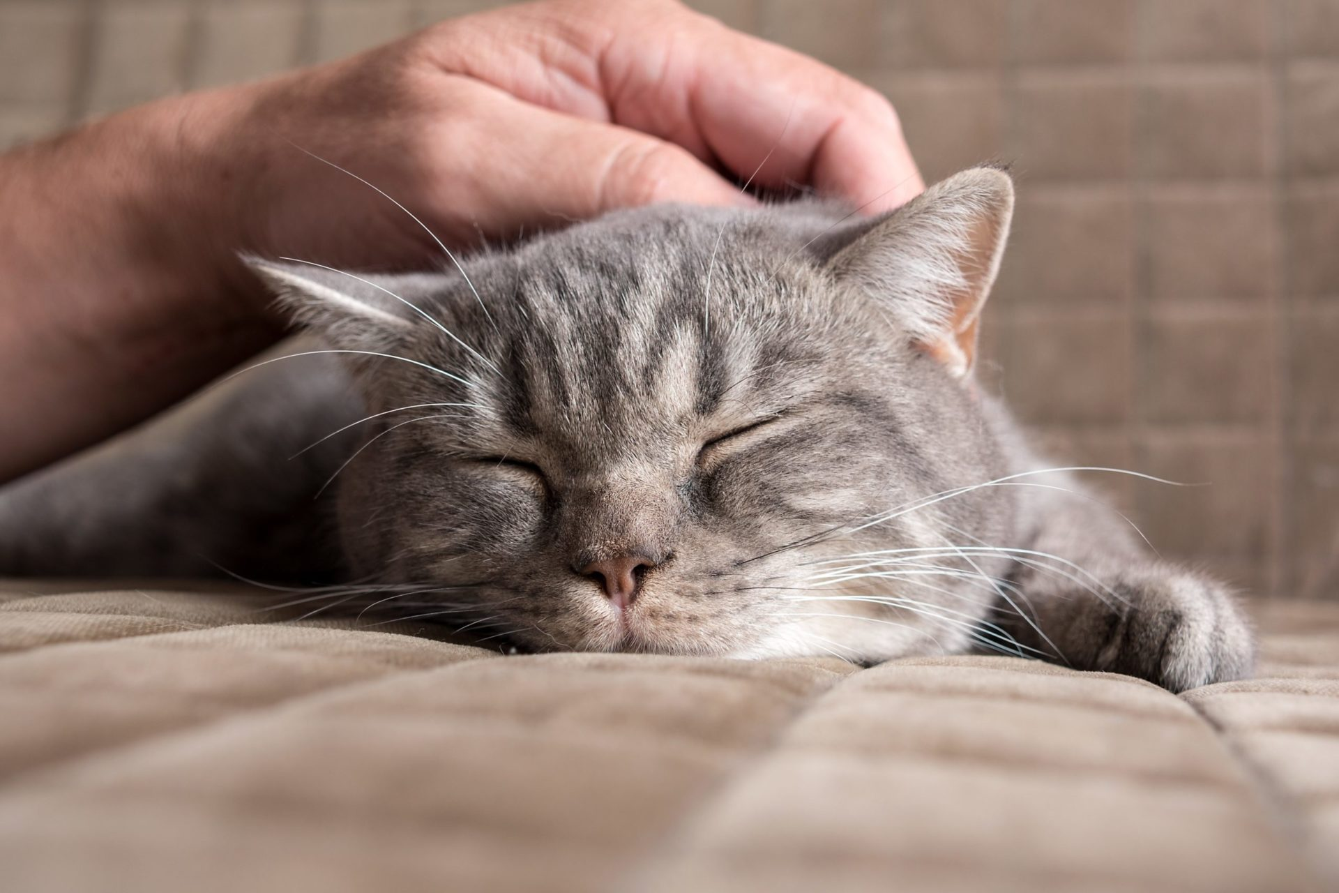 Coronavirus and Your Pet:  Everything You Need to Know