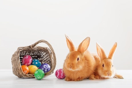 Have A Happy, Healthy Easter With Your Pets