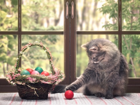Image Have A Happy, Healthy Easter With Your Pets