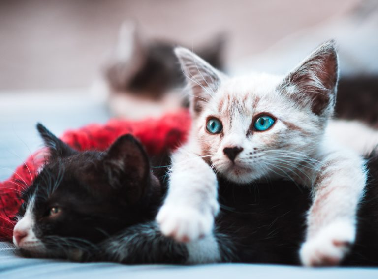 Image Successfully Settling Your New Cat Or Kitten Into Their New Home