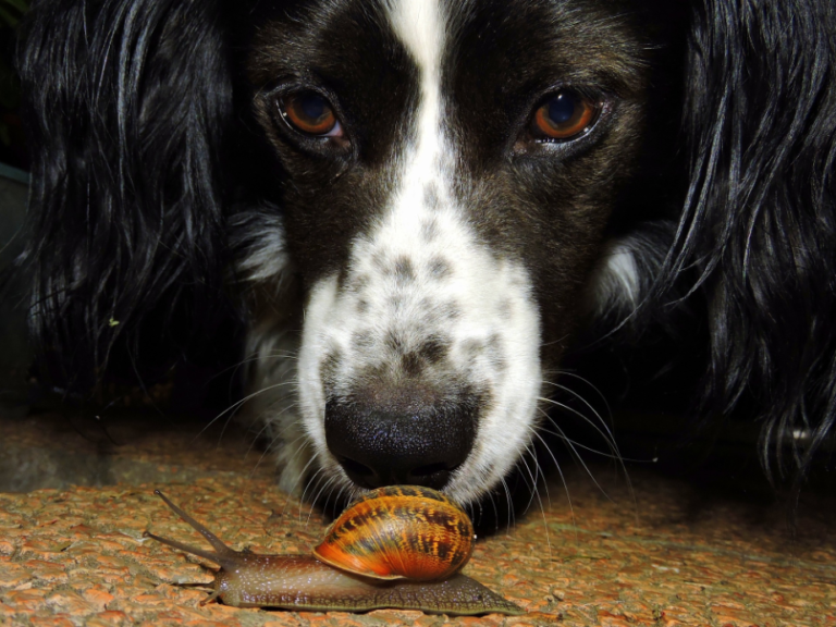 Image Is Your Pet At Risk Of Lungworm?