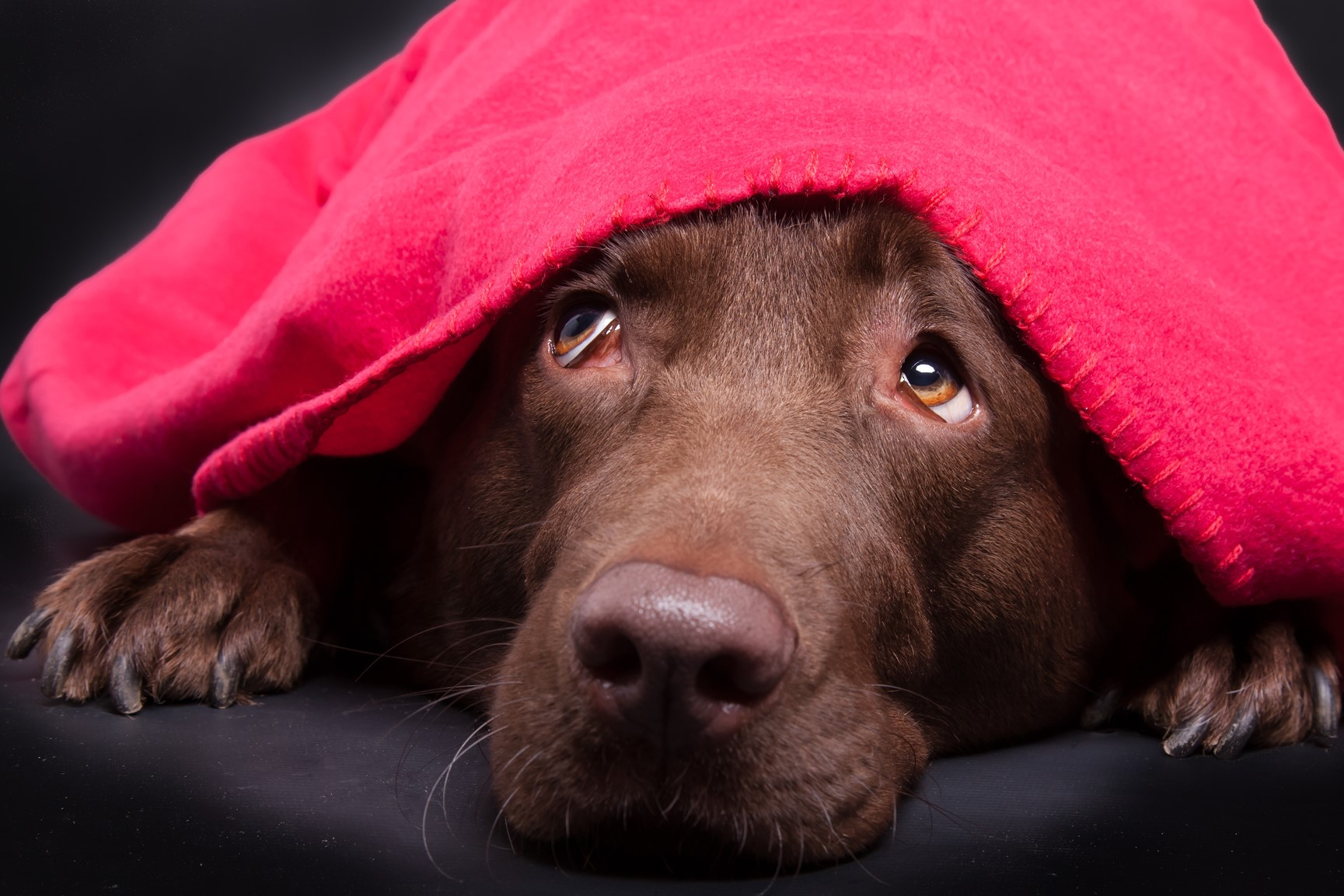 Fireworks: Keeping Your Pets Calm and Happy