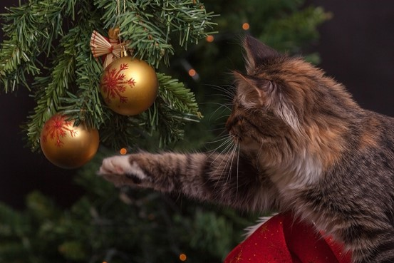 Image A Christmas Guide For Healthy, Happy Pets