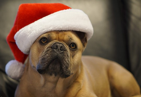 A Christmas Guide For Healthy, Happy Pets