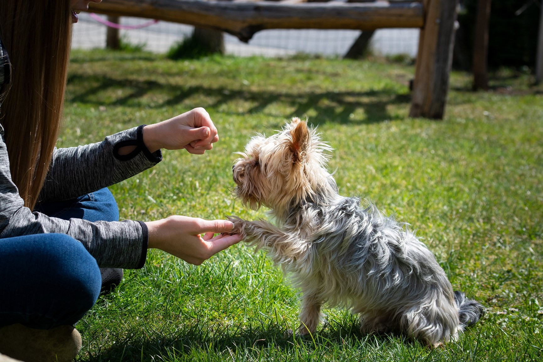 Your Guide To General Pet Wellbeing