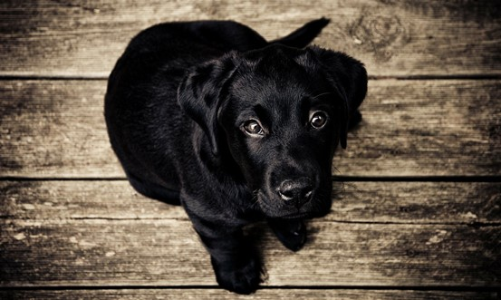 A Guide to Ensure Happy & Healthy Puppies and Kittens